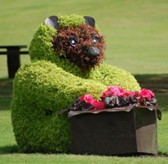 Forres in Bloom Bear