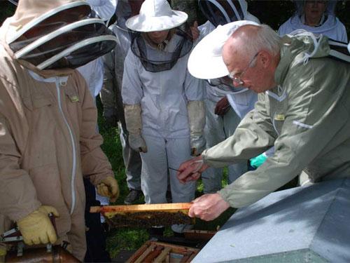 10178_Beekeeping6