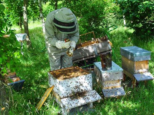 10178_Beekeeping7