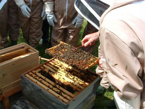 10178_Beekeeping8