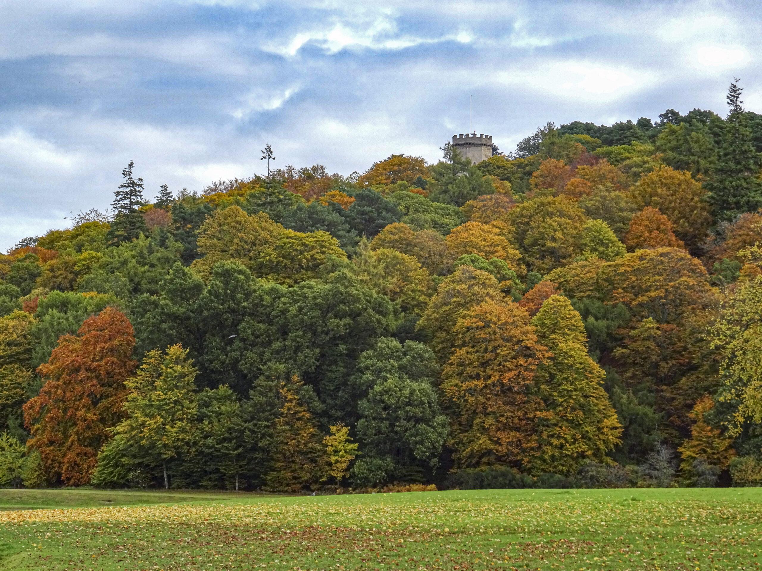 Cluny Hill woodland